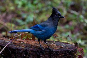 Rüyada Uçan Mavi Muhabbet Kuşu Görmek