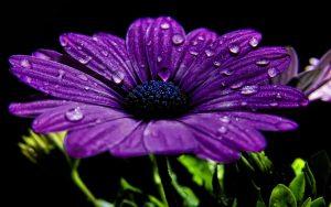 Rüyada Güzel Mor Çiçek Görmek