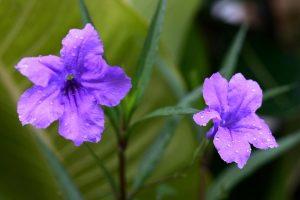 Rüyada Koyu Mor Çiçek Görmek