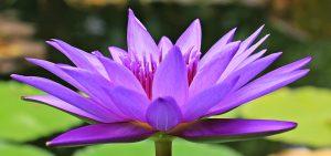 Rüyada Mor Çiçek Bahçesi Görmek