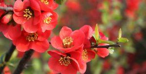 Rüyada Anneye Çiçek Toplamak