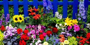 Rüyada Çiçek Poleni Toplamak