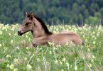 Rüyada Koşan Atlar Görmek