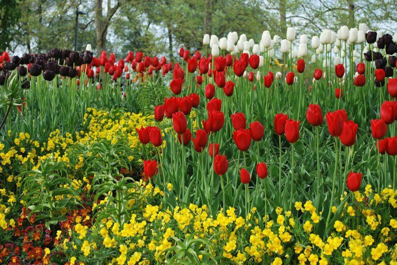 Rüyada Çiçek Toplamak