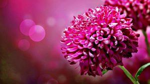 Rüyada Sevgiliye Çiçek Toplamak