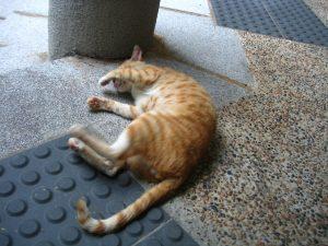 Rüyada Konuşan Kedi Görmek