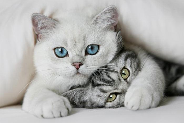 Rüyada Eve Beyaz Kedi Girdiğini Görmek