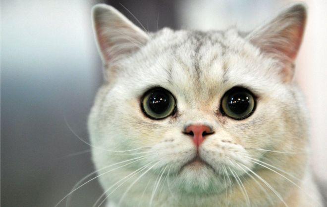 Rüyada Gece Eve Kedi Girdiğini Görmek