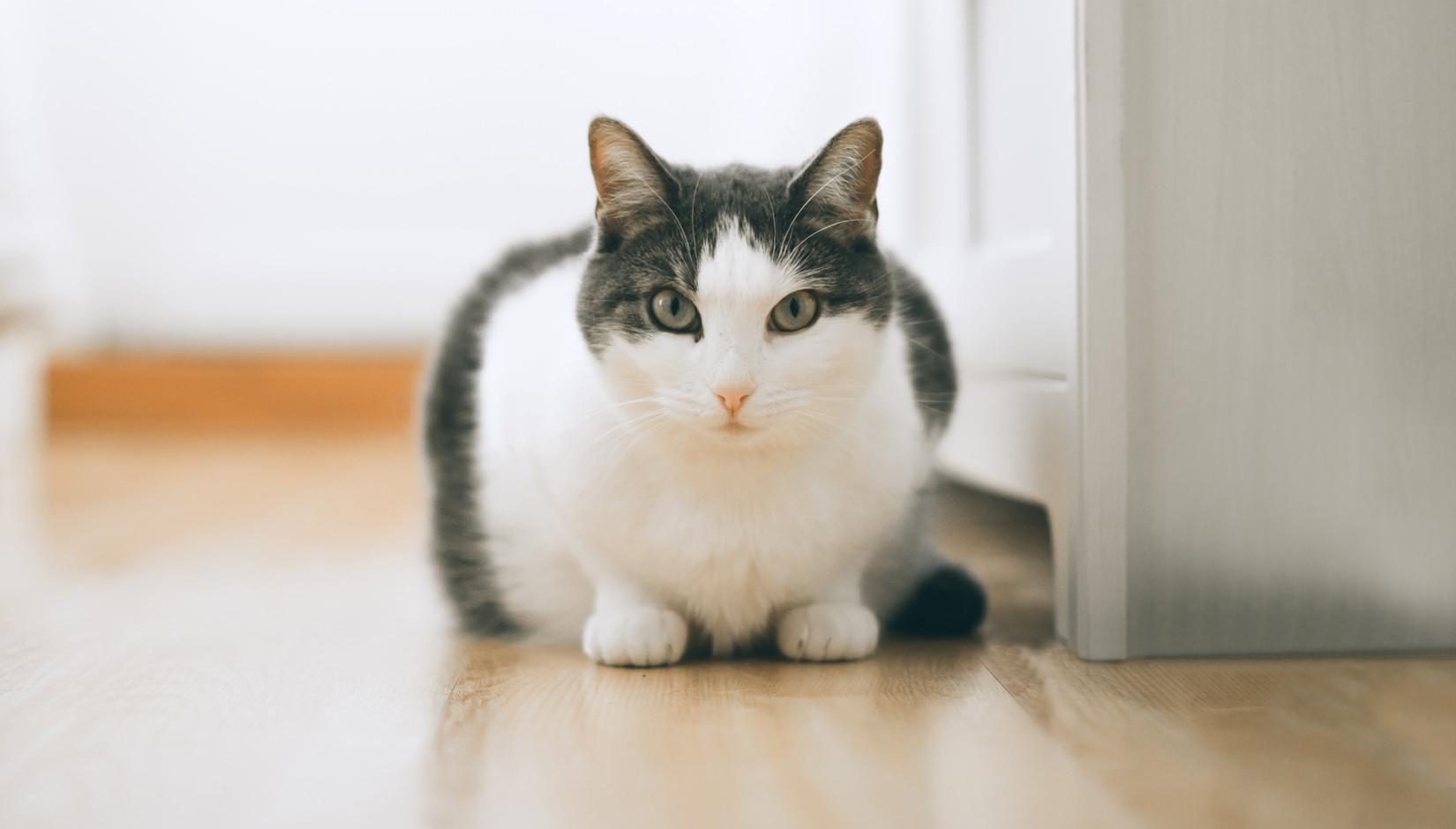 Rüyada Eve Yavru Kedi Girdiğini Görmek