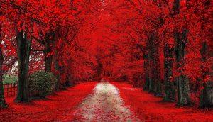 Rüyada Küçük Kırmızı Erik Ağacı Görmek