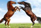 Rüyada Atların Kavga Ettiğini Görmek