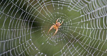 Rüyada Çok Örümcek Görmek