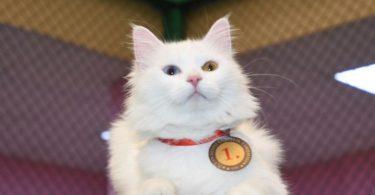 Rüyada Kedi işemesi