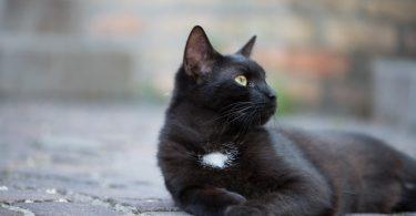 Rüyada Kediyi Dövmek