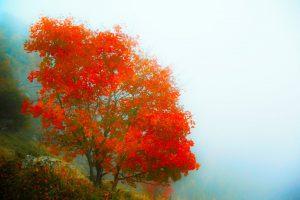 Rüyada Kırmızı Erik Ağacı Dalı Görmek