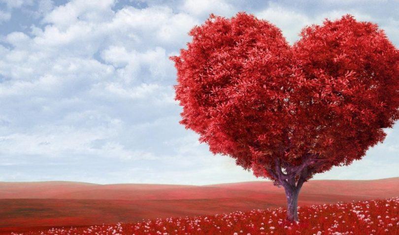 Rüyada Kırmızı Erik Ağacı Görmek