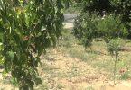 Rüyada Meyve Ağaçları Görmek