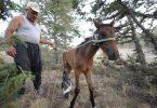 Rüyada Ölmüş At Görmek