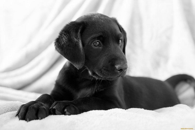 Rüyada Siyah Yavru Köpek Görmek