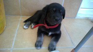 Rüyada Tatlı Siyah Yavru Köpek Görmek