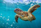 Rüyada Büyük Kaplumbağa Görmek