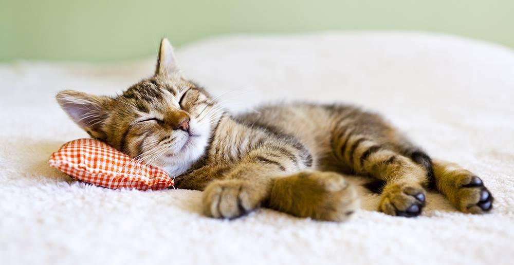 Rüyada Tekir Küçük Kediler Görmek