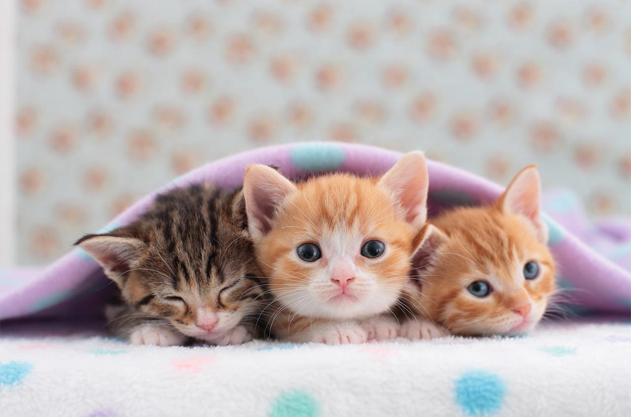 Rüyada Küçük Kediler Görmek ve Sevmek