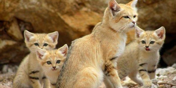 Rüyada Küçük Kediler Görmek