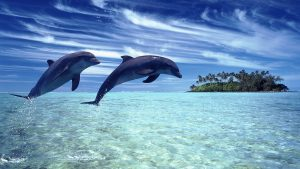 Rüyada Mavi Denizde Yunus Balığı Görmek
