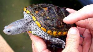 Rüyada Minik Su Kaplumbağa Görmek