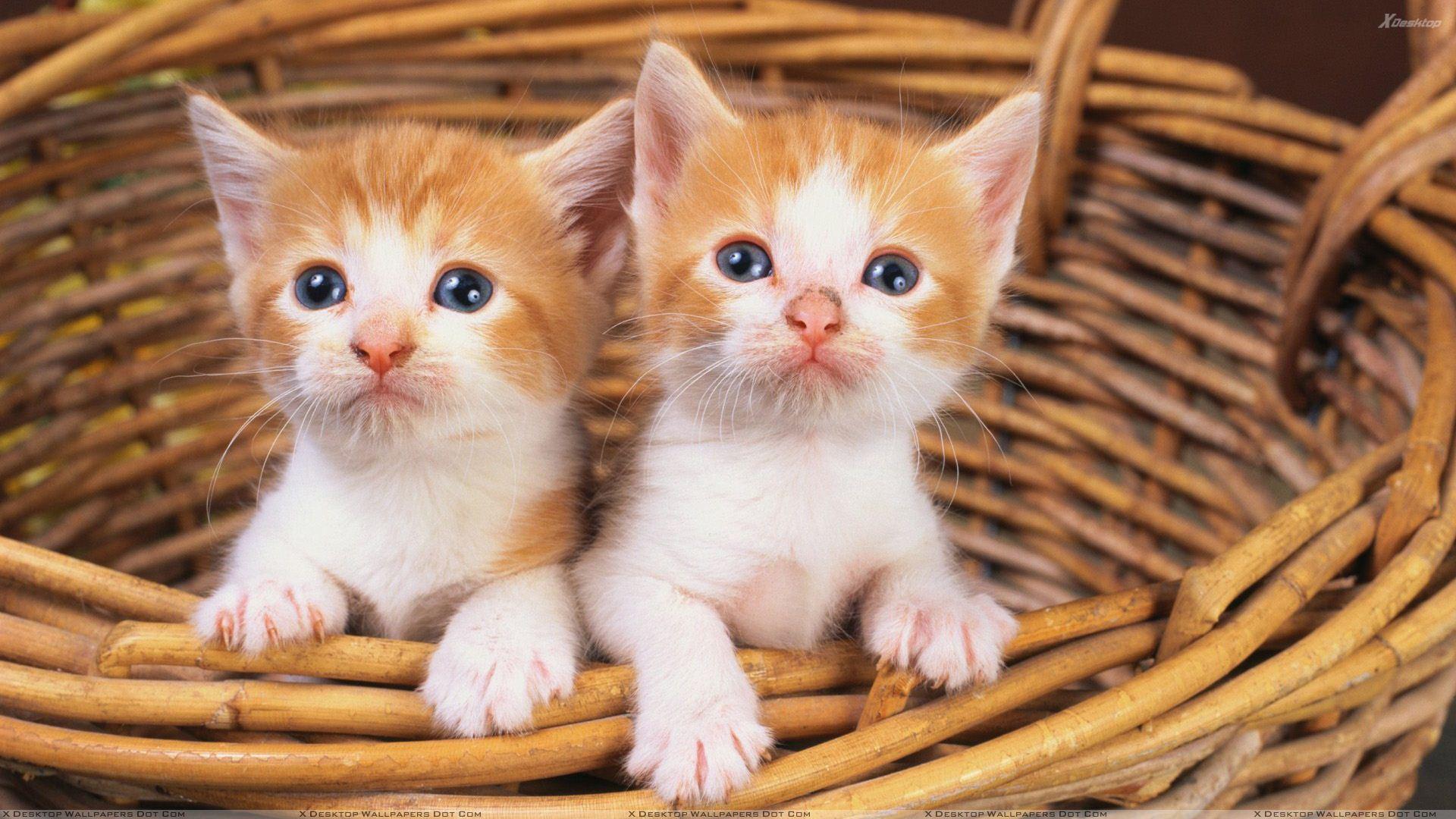 Rüyada Küçük Kediler Görmek ve Sahiplenmek