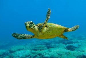 Rüyada Akvaryumda Su Kaplumbağası Görmek