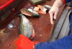 Rüyada Balık Yıkamak