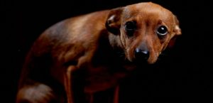 Rüyada Cami Duvarına işeyen Köpek Görmek