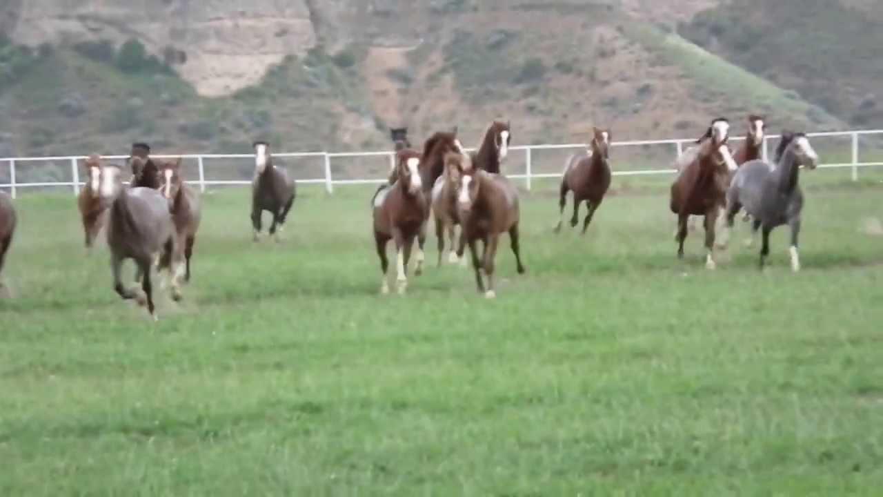 Rüyada Kırda At Çiftliği Görmek