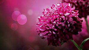 Rüyada Kırmızı Çiçek Sulamak