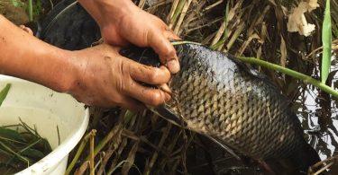 Rüyada Oltayla Balık Tutmak