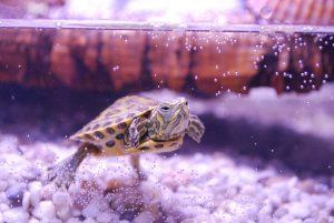Rüyada Ölü Su Kaplumbağası Görmek