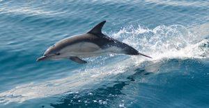 Rüyada Denizde Yunus Balığı Yüzdüğünü Görmek