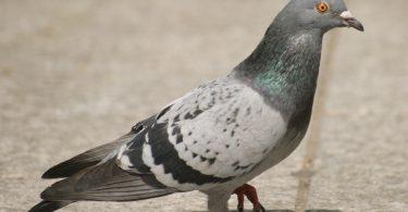 Rüyada Güvercin Yuvası Görmek