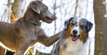 Rüyada iki Köpek Görmek