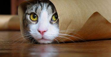 Rüyada Kedi Kovalaması
