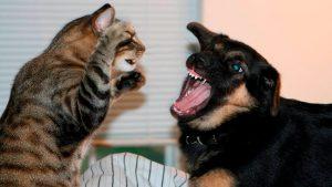Rüyada Köpeklerin Kedilerin Saldırması