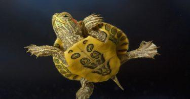 Rüyada Su Kaplumbağa Görmek