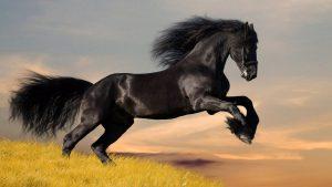 Rüyada Yavru At Koştuğunu Görmek