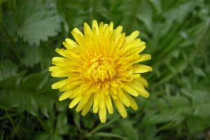 Rüyada Sarı Çiçek Koklamak