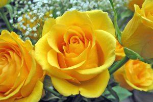 Rüyada Sarı Çiçek Sulamak