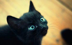 Rüyada Siyah Kedi Kovalaması