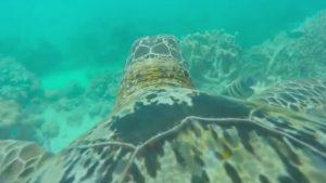 Rüyada Su Kaplumbağası Avladığını Görmek