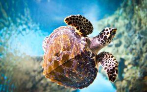 Rüyada Su Kaplumbağası Yüzdüğünü Görmek